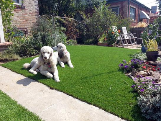 Artificial Grass Photos: Artificial Turf Cost Benjamin, Utah Dog Pound, Front Yard Design