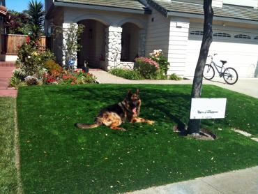 Artificial Grass Photos: Artificial Turf South Ogden, Utah Drainage, Front Yard Landscape Ideas