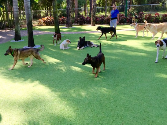 Artificial Grass Photos: Faux Grass Aurora, Utah Dogs,  Dog Kennels
