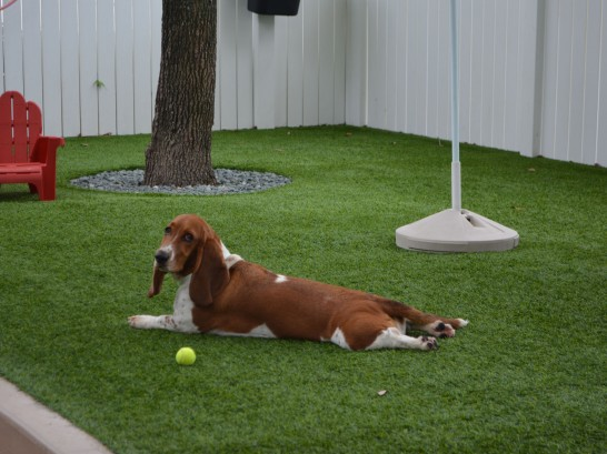 Artificial Grass Photos: Grass Carpet Liberty, Utah Artificial Turf For Dogs,  Dog Kennels