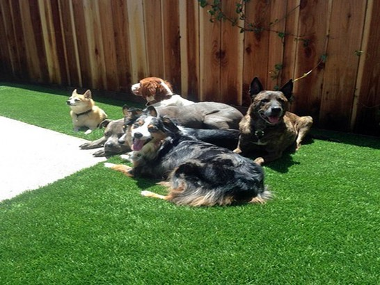 Artificial Grass Photos: How To Install Artificial Grass Helper, Utah Landscape Design, Dogs Runs