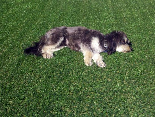 Artificial Grass Photos: Lawn Services Vineyard, Utah Landscape Design,  Dog Kennels