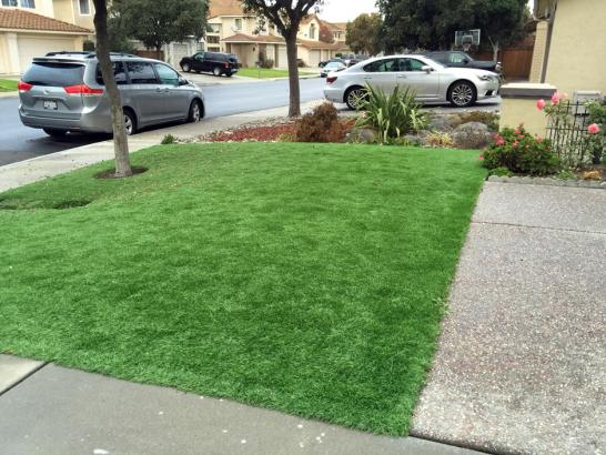 Artificial Grass Photos: Outdoor Carpet Thompson Springs, Utah Home And Garden, Front Yard Landscape Ideas